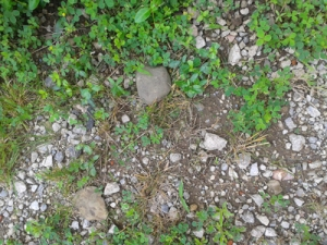 Driveway gravel, grass and weeds TWO